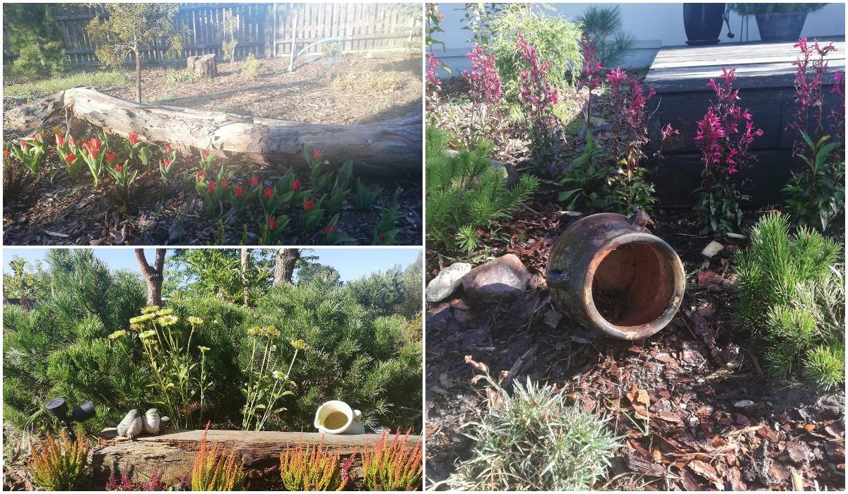 Ogród Iwony z