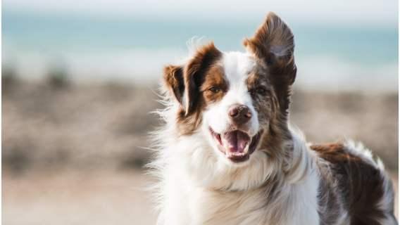 Emerytura dla psów