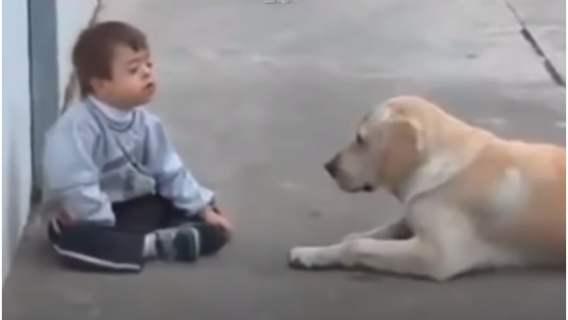 Labrador i jego niezwykła metoda