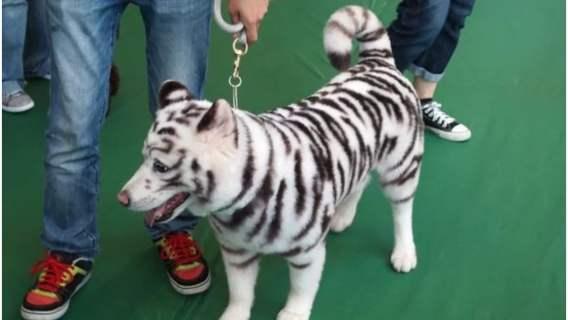 Psy wyglądające jak dzikie zwierzęta