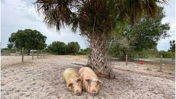 Sanktuarium dla zwierząt w potrzebie