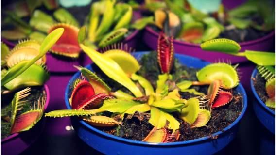 Badania nad roślinami udowodniły, że są równie inteligentne co zwierzęta