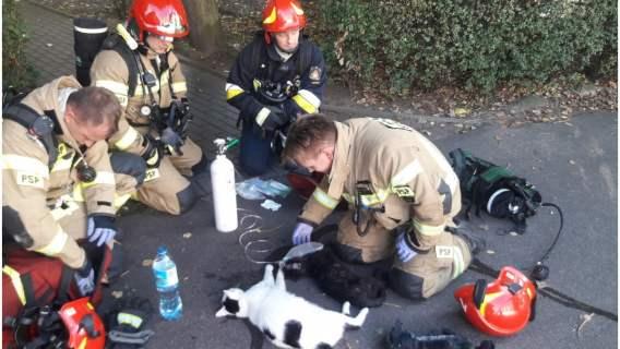 Straż pożarna ratuje potrzebujące koty