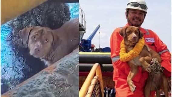 Pies został uratowany przez mechanika z platformy wiertniczej