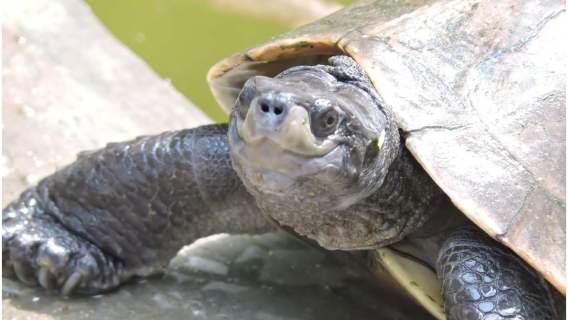 Żółw z uśmiechem na twarzy