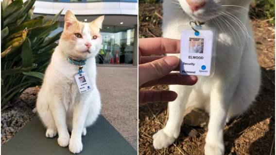 Kot pracownik
