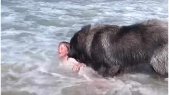 Pies zachował się w niecodzienny sposób