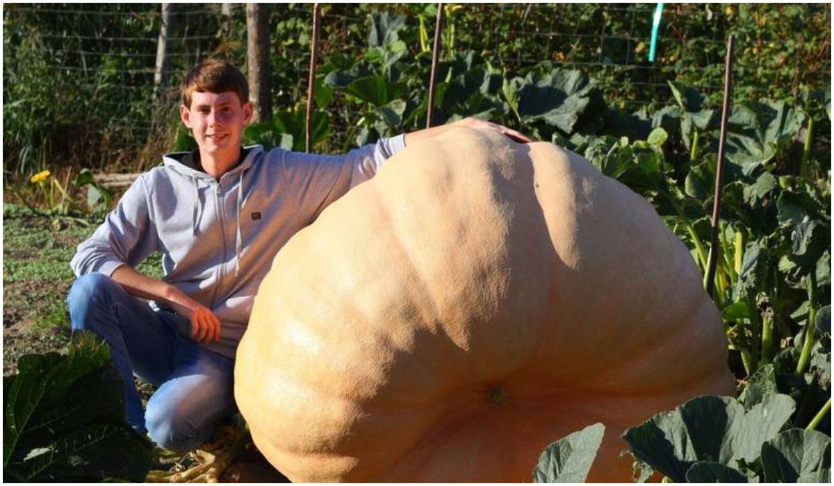 Warzywa gigantycznych rozmiarów