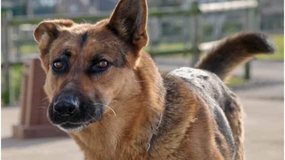 Pies i urlop, który przysługuje na wychowanie zwierzaka. Nowy pomysł firmy Bolt