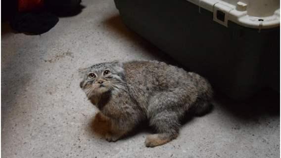 Zoo Poznań odnalazło swojego członka zwierzęcej rodziny