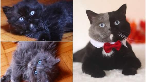 Kot o dwukolorowej sierści został ojcem