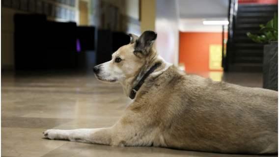 Niesamowite, czego dokonał pies, by odnaleźć swoich właścicieli. Wyczyn pupila jest podziwiany na całym świecie