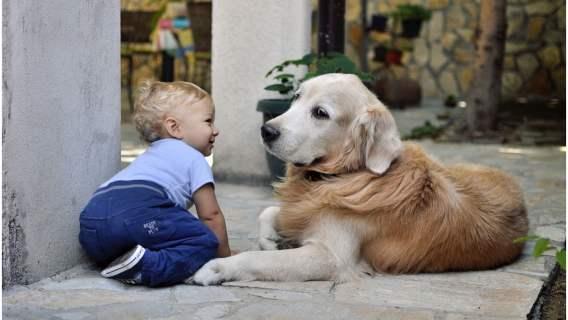 Pies członkiem rodziny?