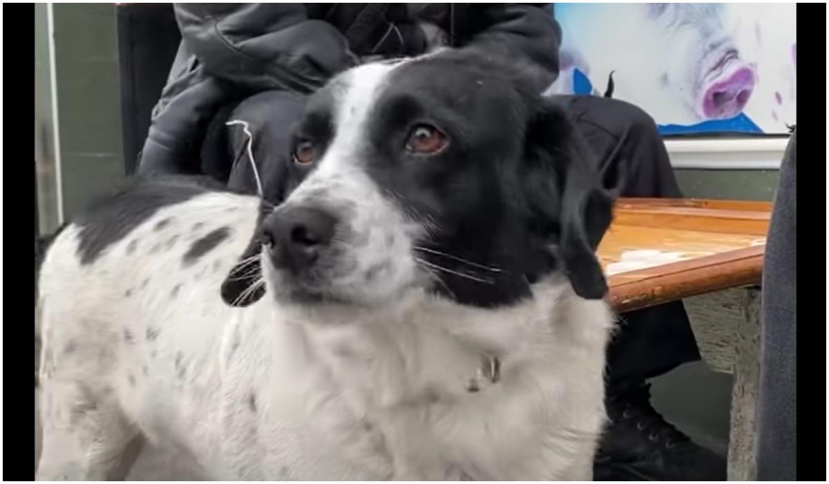 Pies z Gruzji pomaga dzieciakom