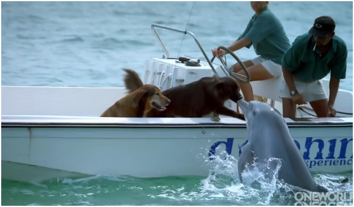 Pies i delfin