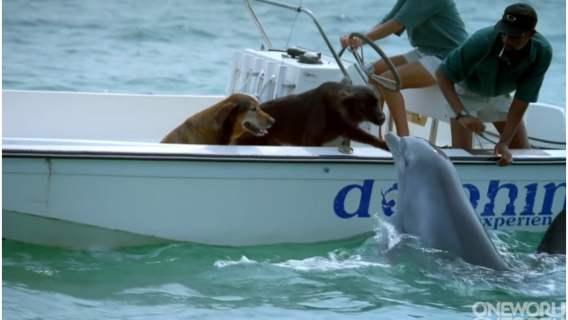 Pies dostał nadzwyczajnie uroczego buziaka od delfina, który akurat wyłonił się z wody